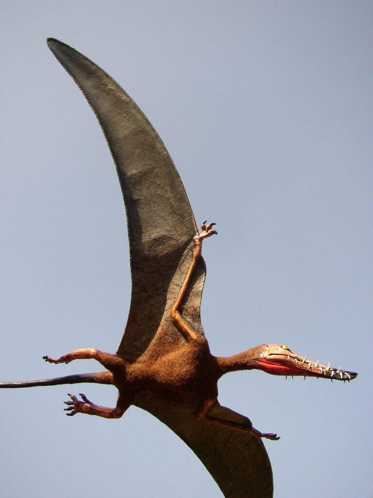 Wetenschappelijk kunstwerk van de pterosauriër Rhamphorhynchus life sized. Reconstructie gemaakt door kunstenaar Jaap Roos art