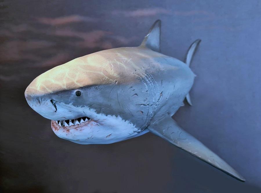 Sculpt Carcharocles Otodus megalodon anatomisch correct en dus wetenschappelijk verantwoord model van de uitgestorven haai