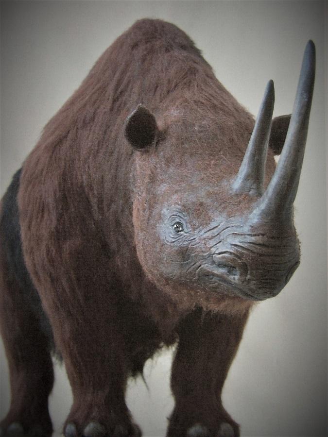 wolharige neushoorn schaalmodel reconstructie van prehistorisch diermodel