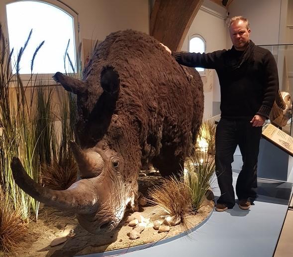 woolly rhino lifesize/wolharige neushoorn ter illustratie gebruikt voor een pagina van wikipedia
