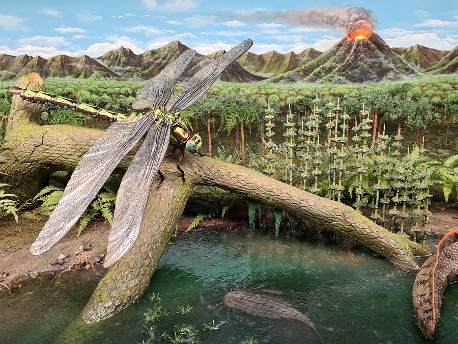 Prehistorisch diorama van het Carboon tot het Devoon. Dit diorama bevat sculpturen van een libelle, tiktaalik, en reuzenschorpioen.